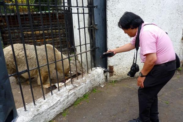 Японец может наблюдать за белыми медведями по несколько часов