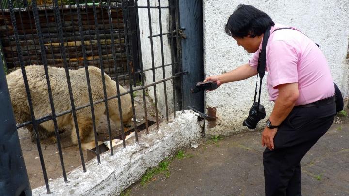 В Большереченский зоопарк ради белой медведицы приехал японский блогер