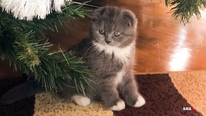 План на Новый год — завалить елку! Показываем, как коты путаются в гирляндах и хотят съесть мишуру