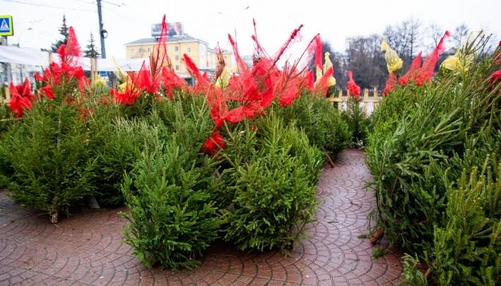 «Приносите без мишуры и украшений»: у ярославцев заберут новогодние ёлки