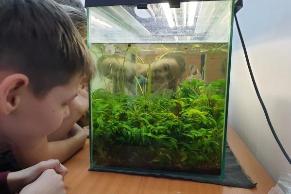 Дети учатся оформлять аквариумы и ухаживать за ними