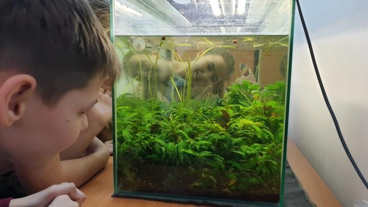 В школе на Ястынской дети занимаются аквариумнистикой вместе с учеными