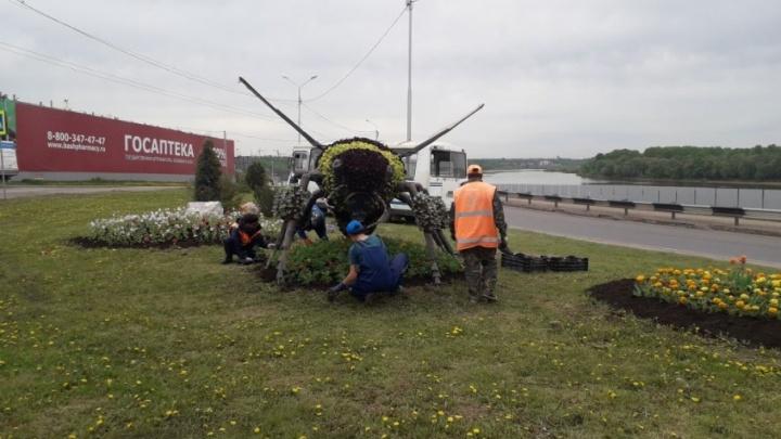 «Башкирская пчела» вернулась в Уфу