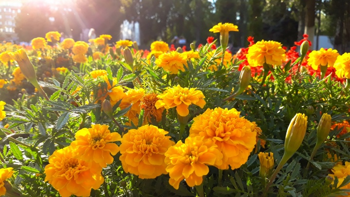 Карнавал и конкурс на лучший костюм: фестиваль цветов вернули в Струковский сад