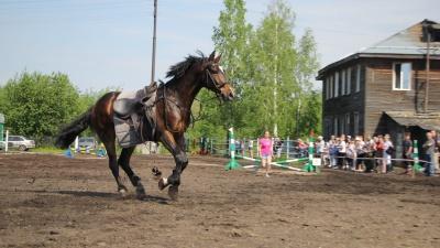 Быстрые и красивые: фоторепортаж с открытия конноспортивного сезона в Архангельске