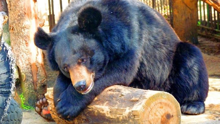 Как не умереть от жары: пять лайфхаков от животных Большереченского зоопарка