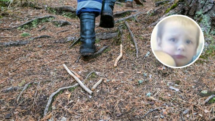 Заблудившегося в лесу 4-летнего мальчика ищет весь Красноярский край: подробности спасения
