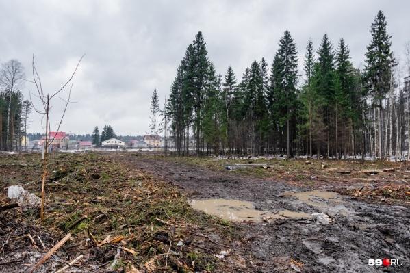 Жители Кировского района требуют остановить вырубку леса