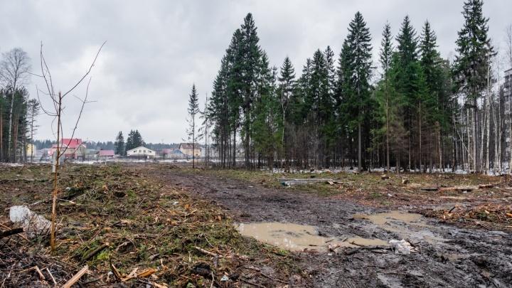 В Перми прошел митинг против вырубки леса под инфекционную больницу