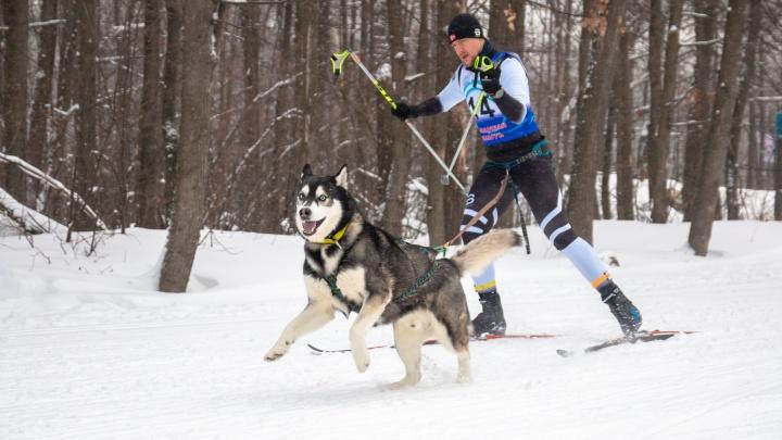 Потомки волков с голубыми глазами: в Самаре прошли «Рождественские гонки» на собачьих упряжках
