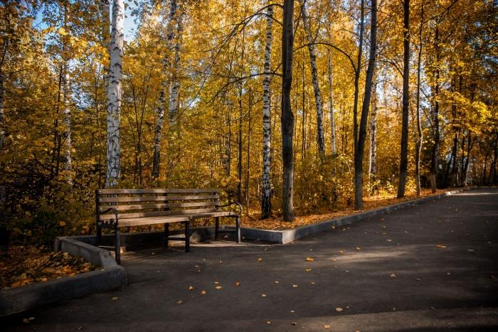В этом году астрономическая осень наступит утром в воскресенье, в 8:55