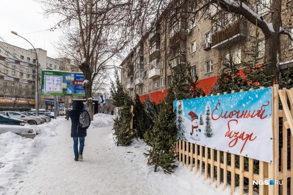 Ёлочные базары открылись по всему городу в десятых числах декабря и проработают до конца года — на некоторые можно будет заглянуть и в январские праздники