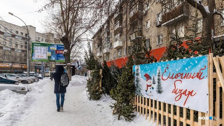Ёлки-иголки: изучаем, что и за сколько продают на новогодних ёлочных базарах в Новосибирске