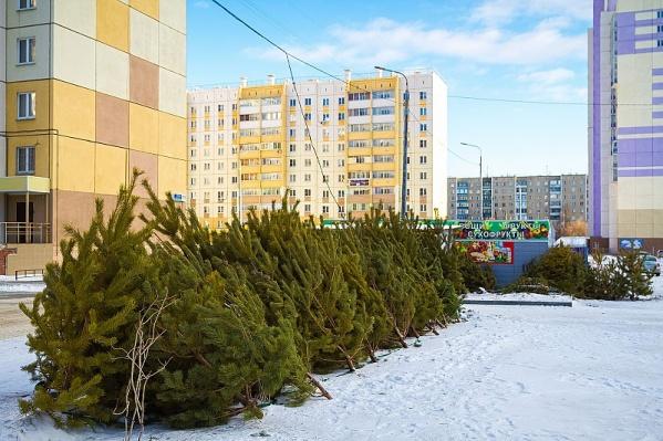 В этом году в Челябинске официально утвердили 146 мест для продажи зелёных красавиц