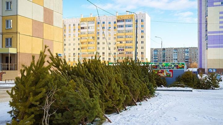 Праздник к нам приходит: в Челябинске к Новому году откроют 146 ёлочных базаров