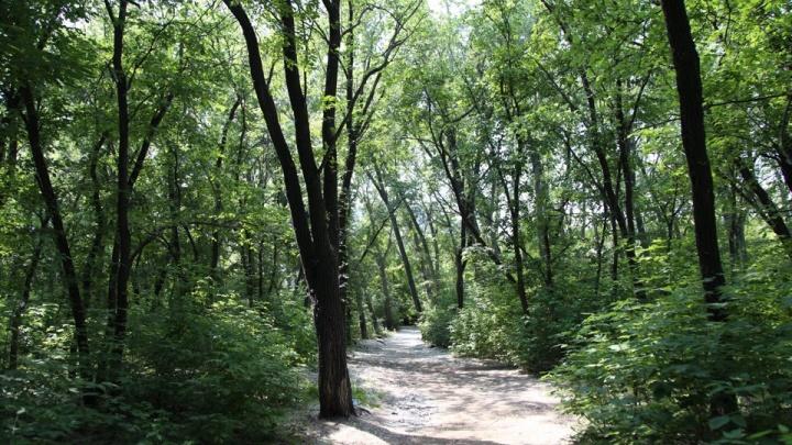 В Никольской роще проложат тропы для прогулок и установят диваны-качели