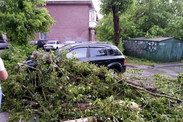 Это дерево упало на машину во дворе на проспекте Дзержинского, 3А — в сводку мэрии случай не попал