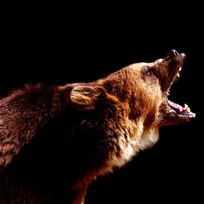Кузбассовец отбился от медведя в тайге, где заблудился и бродил неделю