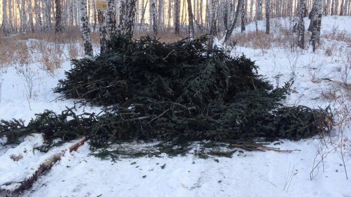 «Похоже на зелёное кладбище»: челябинцев возмутили выброшенные ёлки