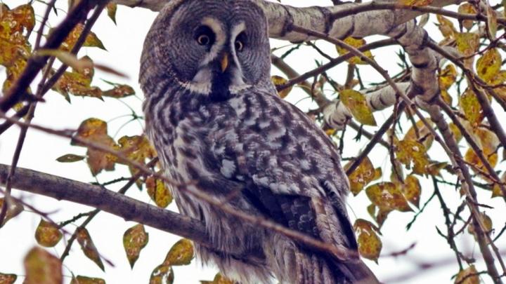 Кадр с шикарной птицей, залетевшей на Декабристов, стал лучшим фото дня в октябре