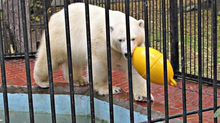 Гостья из Японии подарила медвежонку Ростику новую игрушку