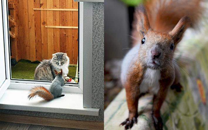 В квартире живут два кота, которые периодически наблюдают за новым членом семьи