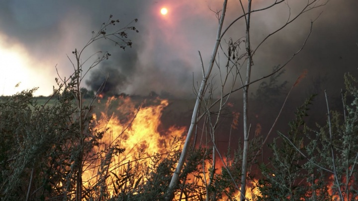 В Ростове горит Кумженская роща: публикуем самые «огненные» кадры