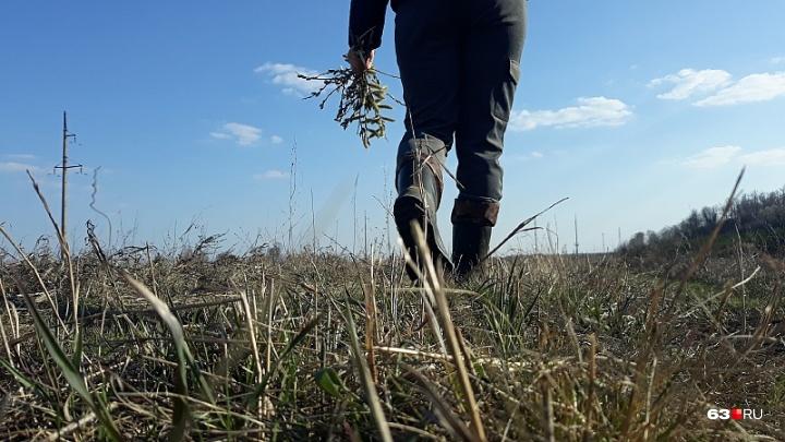 В Самарской области задержали браконьеров за убийство беременной косули