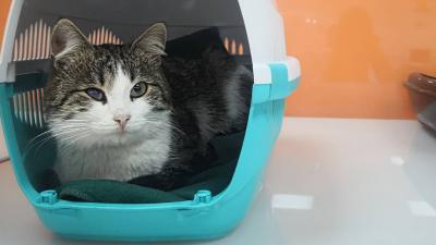 В Тюмени ищут новый дом коту, хозяин которого погиб при пожаре