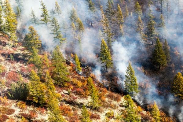 Сергей Филинин сам видел лесной пожар в Иркутской области