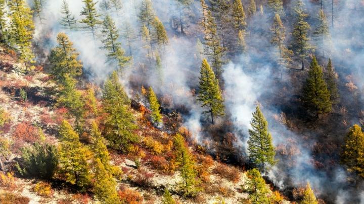 «Сколько сотен тысяч людей нужно загнать в тайгу»: красноярский фотограф о тушении лесных пожаров