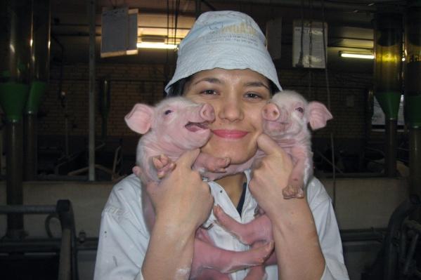 Сотрудница БГАУ на свиноферме в Дании
