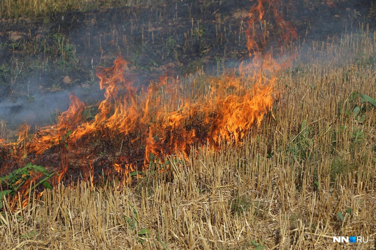 Больше никаких шашлыков. В Нижегородской области полностью запретили разводить открытый огонь