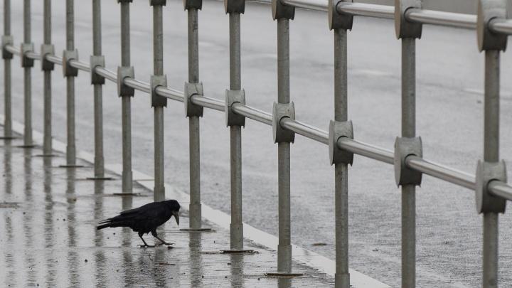 Готовимся к холодам: Волгоградскую область атакуют ледяной ветер и первые заморозки