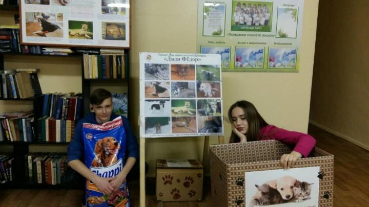 В курганской гимназии организовали сбор корма для бездомных животных-инвалидов