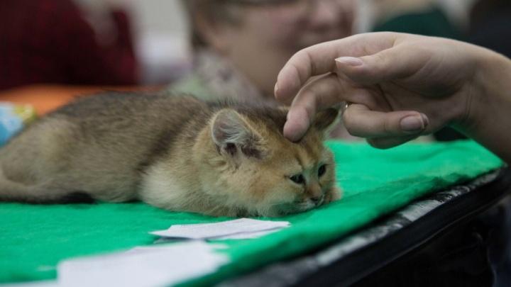 В Уфе спасают котенка, свалившегося на козырек девятиэтажки