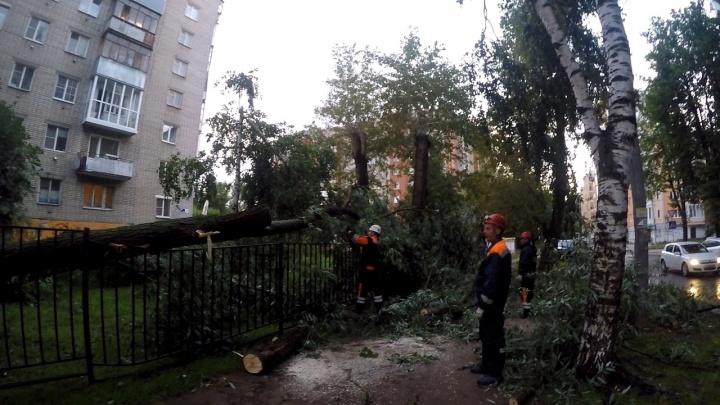 Вырванные с корнем деревья и разломанные трубы: как бушевал ураган в Ярославле