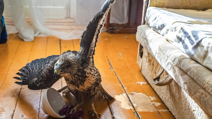 Какая дичь! Восемь российских квартир с домашними животными, которым место в зоопарке