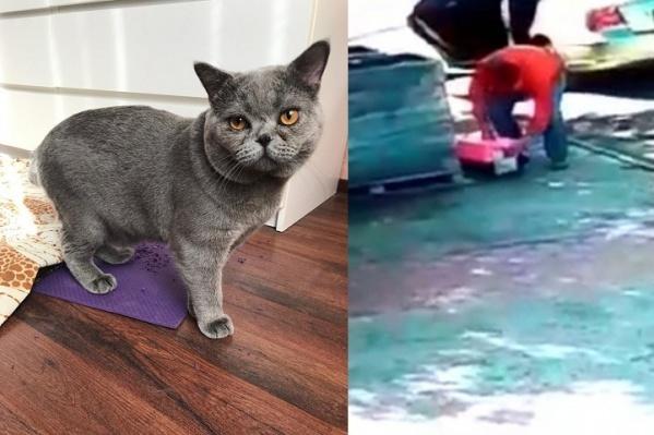 Новые хозяева кастрировали и привили кота