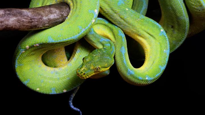 Можно потрогать змею: в Екатеринбургском зоопарке покормят животных на глазах у посетителей