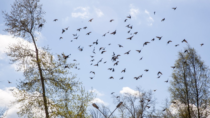 222 гуся и 37 крякв: зачем в Пинежском заповеднике сосчитали птиц