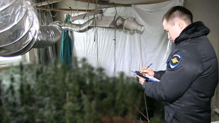В Екатеринбурге наркоделец выдал себя, устроив пожар в квартире, где выращивал коноплю
