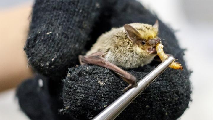 «Спят рядом с макарошками»: школьник из Волжского приютил в своем холодильнике сотни летучих мышей