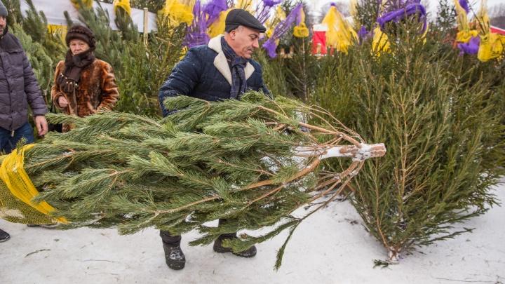 От ста рублей до пяти тысяч: изучаем ёлочный базар в Ярославле