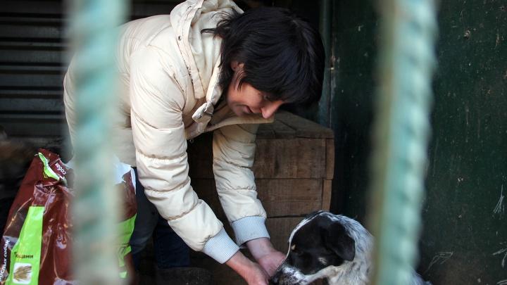 Стала известна зарплата директора службы по отлову собак в Омске
