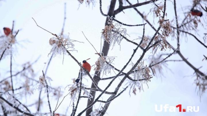 В Башкирии лютуют морозы: республику ожидает холод до –30 градусов