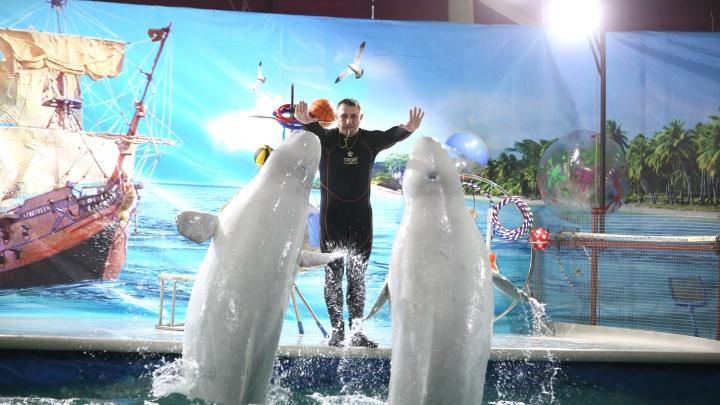 Петицию против строительства дельфинария в Уфе подписали 4240 человек