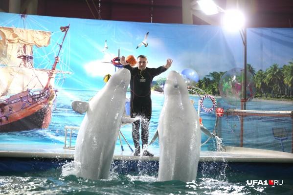 Быть или не быть дельфинарию в Уфе — вот в чем вопрос