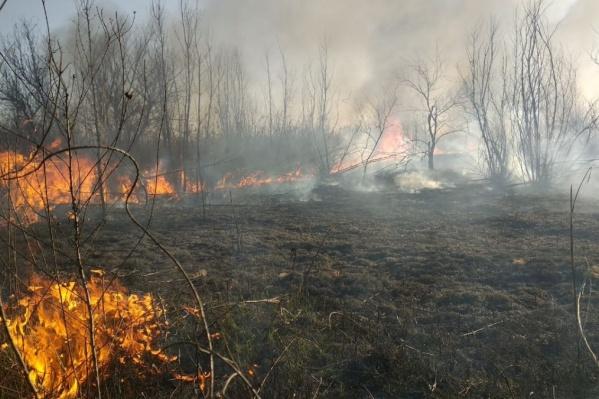 Горожан просят не разводить огонь в городских лесах