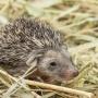 Ушастые, колючие и шипящие: в ростовском зоопарке — очередное пополнение